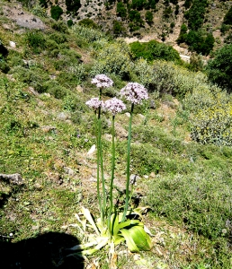 Local flora in Sirikari Gorge